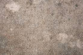 5 signs that you have mold in your carpet