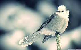 bird wallpapers top free bird
