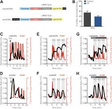 Calmodulin-controlled spatial decoding of oscillatory Ca2+ signals by  calcineurin | eLife