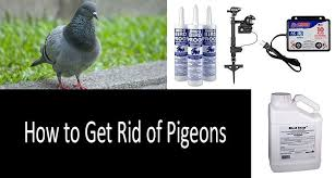 how to get rid of pigeons top 8 pigeon