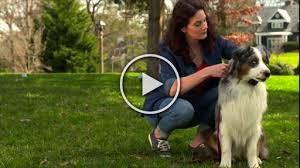 Petsafe Brand Introduces Spring Let S Go Outside Campaign