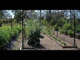 trellis to grow climbing vegetables