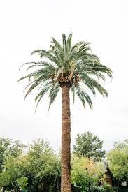 Palm Tree Wallpapers Free Hd Download 500 Hq Unsplash