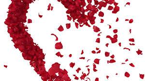 ورود متناثرة على شكل قلب حب 4 Youtube