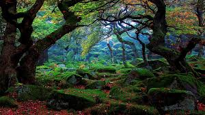forest wallpapers hd 8q3miht