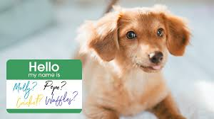 Cute Dog Names for Your Sweet Pup ...