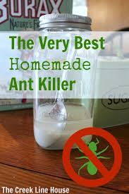 best homemade natural ant