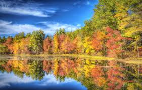 autumn forest trees lake reflection