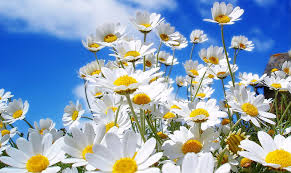 20 خلفية زهور رائعة عالية الدقة مجانا White Flowers Garden