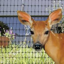 Deer Fences Deer Fencing Deer Fencing Supplies Deer Barrier Barrier Netting Deer Repellents Game Fencing Teksupply