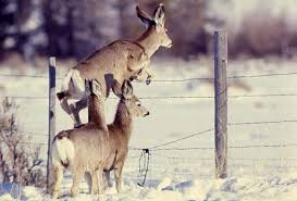Https Extension Usu Edu Rangelands Ou Files Friendly Fences Pdf