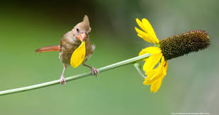 Bio Bits — Menunkatuck Audubon Society