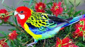 صور طيور ملونه جميلة