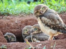 What A Hoot! Baby Owls Clown Around For The Camera In Adorable Family Photograph - Nature Animals Life