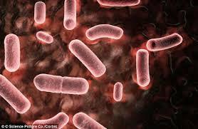 اعراض و اسباب مرض اللستيريا - المرسال