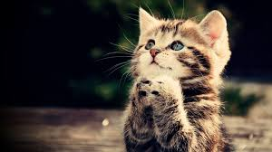 funny kitten wallpapers top free