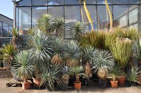 american desert plants import
