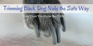 t black dog nails the safe way