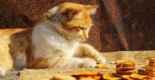 cat treat recipes healthy homemade