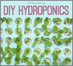 making a diy hydroponics system at home