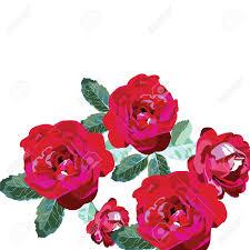 Ramo De Rosas Rojas Aislados En Blanco Flores Fondo Para Las