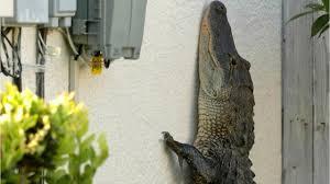 Alligator Myths Running Zigzag Won T Help You And Gators Can Climb