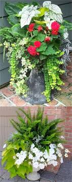 container garden planting