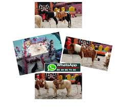 Renta Ponys renta-de-ponys-estado-de-mexico – Lienzo Charro de ...