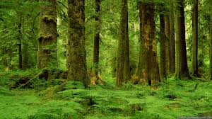 hd forest wallpapers best hd forest