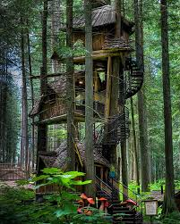 forest nature treehouse tree trunk