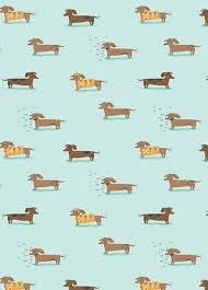 33hye44 weiner dog wallpaper 394x550