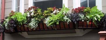 best plants for shade container gardening