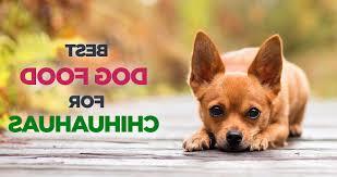 homemade dog food chihuahua petsidi