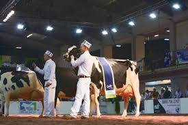 Holstein UK Show: UK Dairy Day