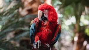 macaw wallpaper id 4970