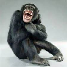 Image result for laughing chimpanzee