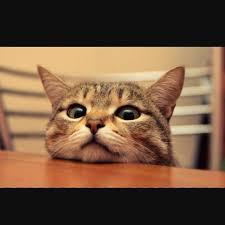 قطط لطيفه ومضحكة Home Facebook