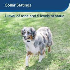 Petsafe Stay Play Wireless Fence For Stubborn Dogs From The Parent C Care About My Pet