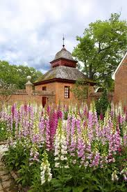 foxglove garden at the palace governor