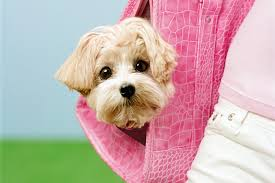 the best dog breed for your health and