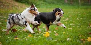 List Of Off Leash Dog Parks In Massachusetts Boston