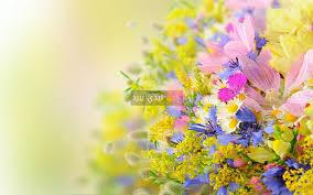 صور ازهار الصيف ليدي بيرد
