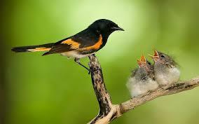 صور طيور حره اروع الطيور الحرة طقطقه