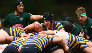 Shute Shield final live stream and TV ...