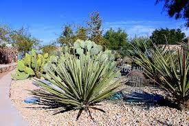 5 glamorous gardens in el paso texas