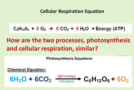 what is the photosynthesis equation