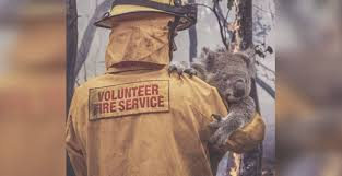 Image result for animals in australia fires