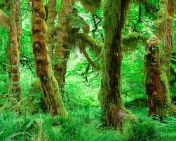 rainforest quotes and descriptions to inspire creative writing