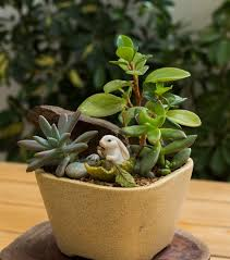 get a miniature garden for your home