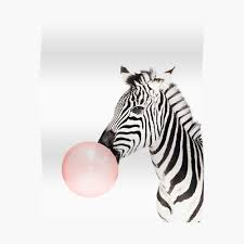 Zebra Print Bubble Gum Nursery Art Zebra Wall Art Animal Kids Room Modern Art Wall Decor Sticker By Juliaemelian Redbubble